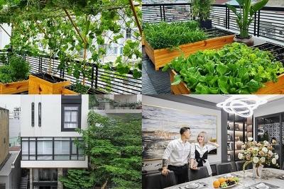 Vườn rau xanh mướt bên trong nhà phố của Lê Hoàng