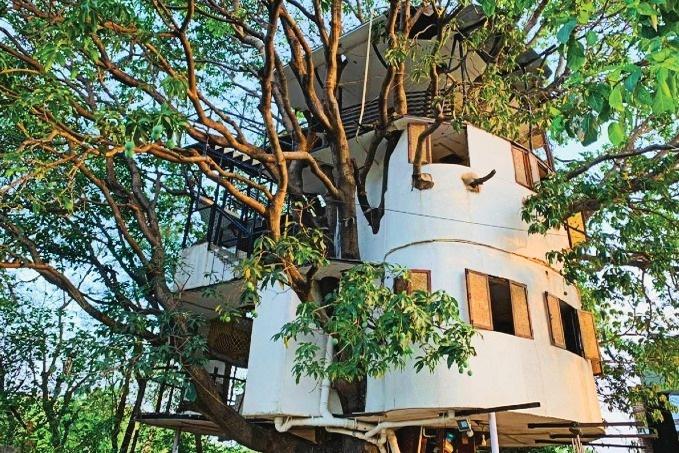 Độc đáo ngôi nhà 4 tầng tọa lạc trên... cây xoài hơn 80 năm tuổi
