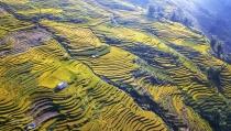 Dải lụa vàng ở độ cao hơn 2.000m nơi đại ngàn Y Tý