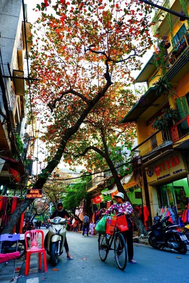 Mùa đông cây bàng lá đỏ...