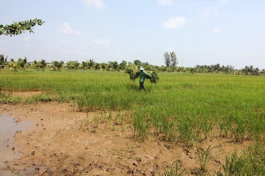 Điều kiện chuyển nhượng đất nông nghiệp đã hết hạn sử dụng
