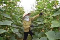 Xây dựng Nông thôn mới tại Bắc Giang: Những bước đi vững chắc