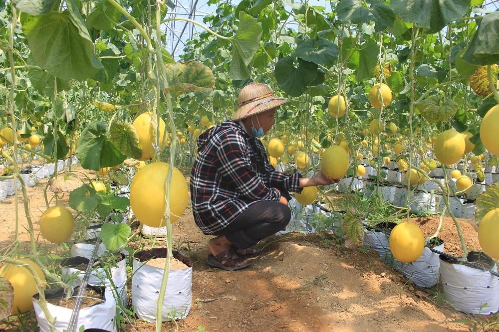 Thanh Hóa: Xây dựng Nông thôn mới chỉ có điểm xuất phát, không có điểm dừng