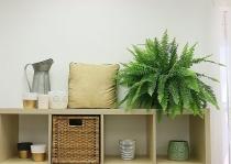 Những loại cây trồng trong nhà giúp bạn có giấc ngủ ngon dễ dàng