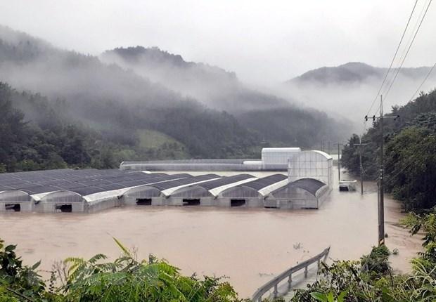 Hàn Quốc: Hàng nghìn người sơ tán, sống trong lều bạt do mưa lũ