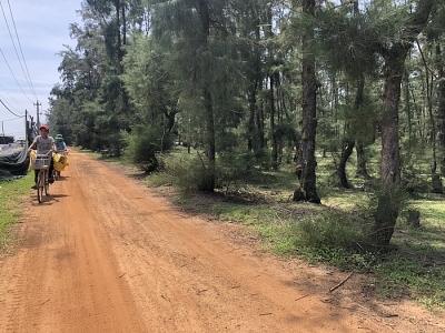 Quảng Ngãi: Sẽ chỉnh tuyến đường để tránh xâm hại rừng phòng hộ ven biển